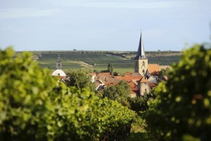 Foto Freinsheim aus Weinberg